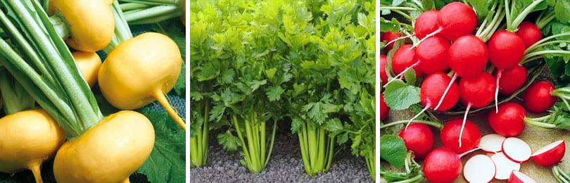 Подзимний посев как способ получить ранний урожай