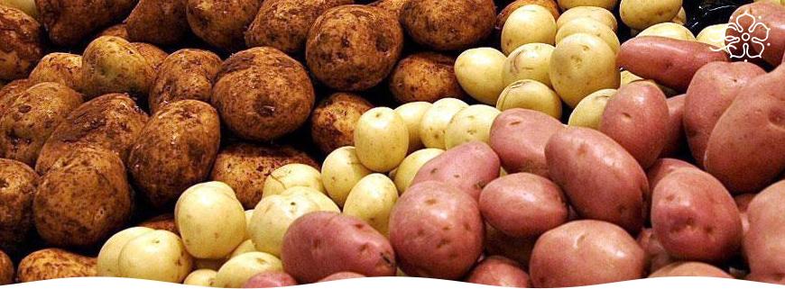 Как правильно ухаживать за картофелем чтобы был хороший урожай