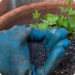 Чтобы вырастить клематис, необходимо правильно выбрать место для его посадки и грамотно подготовить почву.