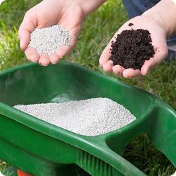Как ухаживать за рододендроном? Рододендронам два раза за сезон дают подкормку из смеси сульфата аммония, сульфата калия и суперфосфата.