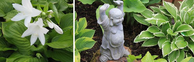 В буддийских летописях хоста упоминается еще в начале нашей эры. Как вырастить хосту?