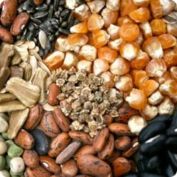 Сколько лет семена овощных культур сохраняют свою всхожесть?
