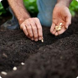 Сроки посева семян на огороде для различных овощных культур