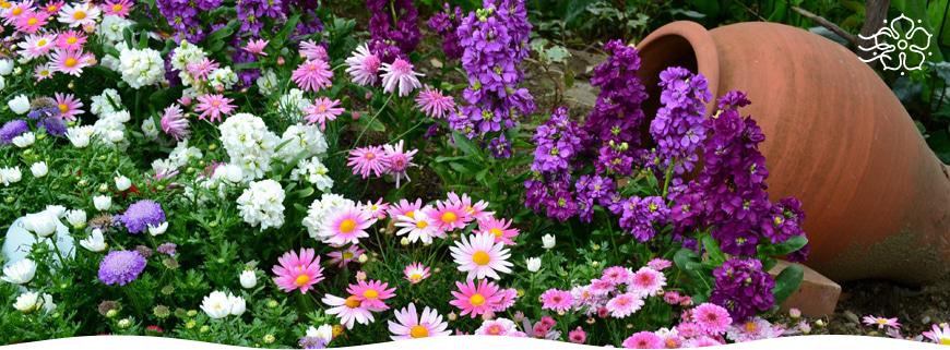 Нужно ли пересаживать комнатные растения осенью?
