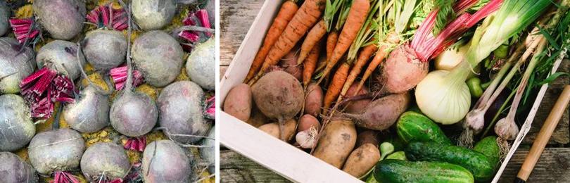 Как правильно организовать зимнее хранение овощей и фруктов
